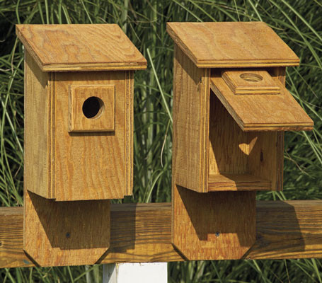 Flip Front Birdhouse with clear wood finish.