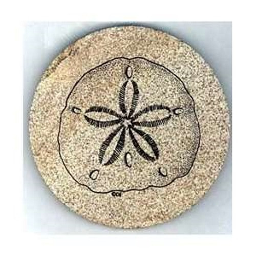 Sand Dollar Coaster Set