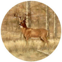 Whitetail Deer Coaster Set